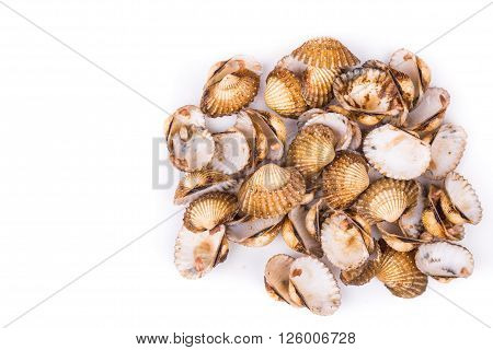 Heaps of cockles shells on white background.  They can be used as partial cement replacement in construction concrete.