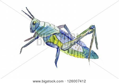 Blue locust illustration. Hand drawn blue locust. Locust isolated on white. Blue grasshopper.