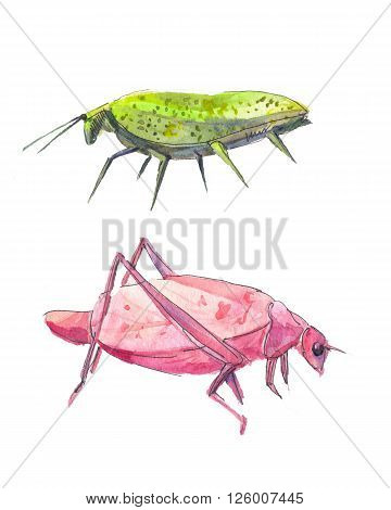 Insects like leaves. Pink and green grasshopper. Isolated on white.