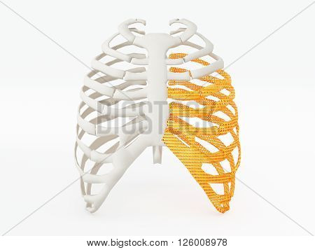 3d printed rib cage. 3d printed implants on white background. 3d illustration.