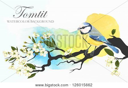 Vector illustration of tomtit on the blooming cherry branch on bright watercolor background