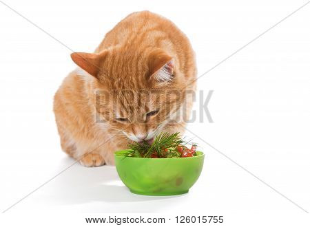 Fat ginger cat eating a salad isolated on white