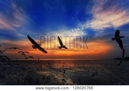 Silhouette of flying seagulls in sunset, Thailand
