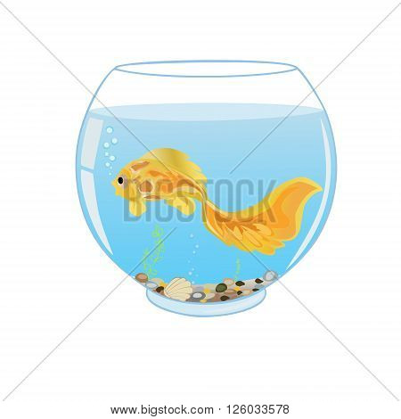 Goldfish swims in the aquarium on a white background. All objects are grouped. Vector.