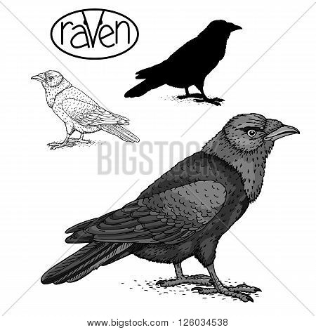 dark raven black silhouette isolated set sign vector illustration