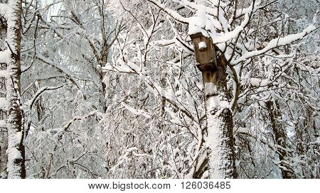 I love to visit the winter woods. Quiet in the winter in the forest. The trees are covered with snow lace they seem to sleep.