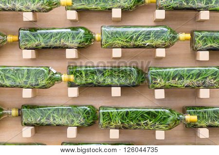 Orchid tissue culture in glass bottles for flower farm