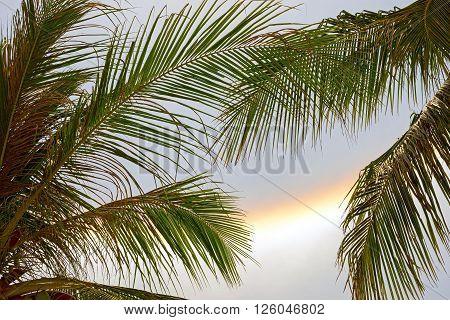 optical phenomenon gala or rainbowl throw palm leaves