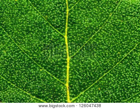 The Green Leaf Macro Detail Background Texture