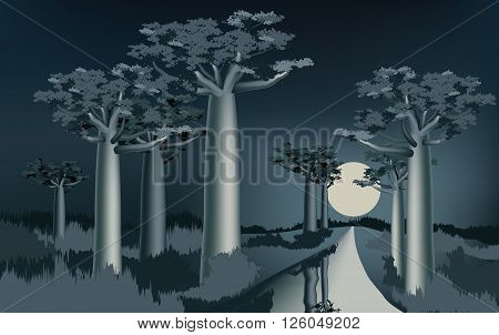 Night in the African baobab forest near the river