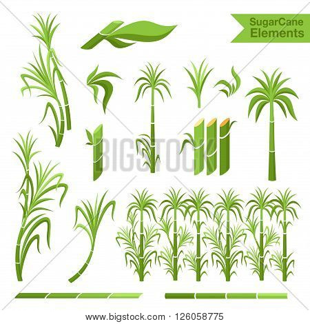 Sugar cane decoration elements. Collection of elemnts for design