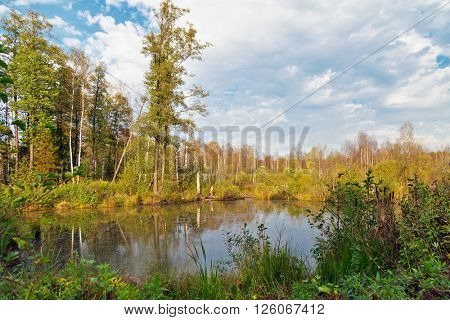 Autumnal forest swamp in forest under cloudy sky