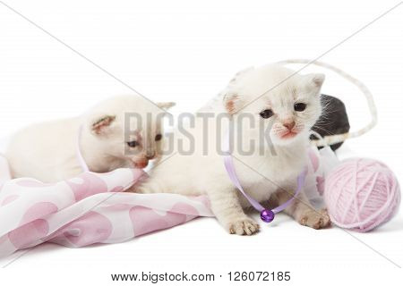 White kittens. Cute kittens in a mauve violet collar with woolen yarn balls isolated at white background. Adorable pets. Small heartwarming kittens. Little cats. Animals isolated. High key