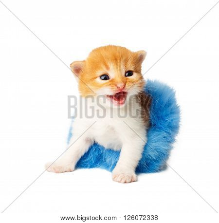 Red happy funny kitten in a blue fur tutu skirt. Cute orange kitten in a blue tutu growls, isolated at white background. Adorable sad pet. Small funny kitten. Little cat. Animal isolated. High key
