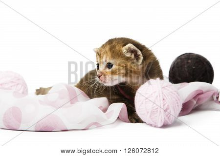 Cute grey striped kitten. Cute kitten sitting in a mauve cloth, violet textile with yarn balls isolated at white background. Adorable pet. Small heartwarming kitten. Little cat. High key