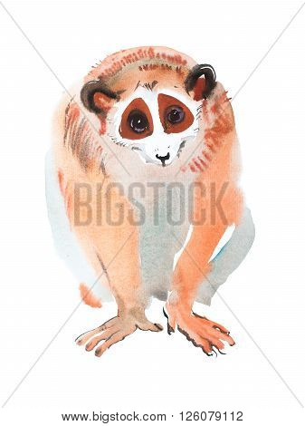 hand-drawn red-haired sitting looking lemur watercolor painting, aquarelle image of exotic furry animal.
