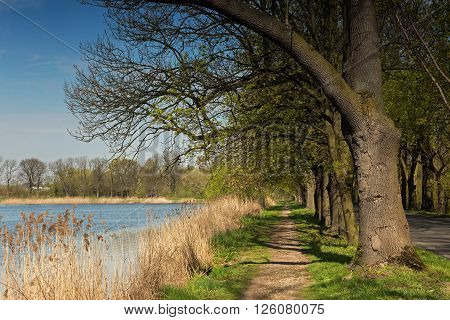Alley with old trees along the pond spring in Poland. Horizontal view.