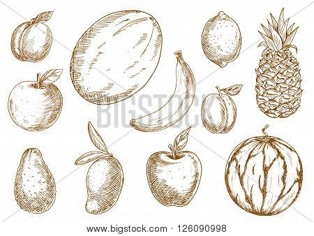 Organically grown selected apples, banana and lemon, plum, mango, pineapple and melon, apricot and avocado, watermelon fruits sketches. Agriculture harvest, recipe book, healthy food design usage