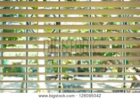 Window Blinds Open