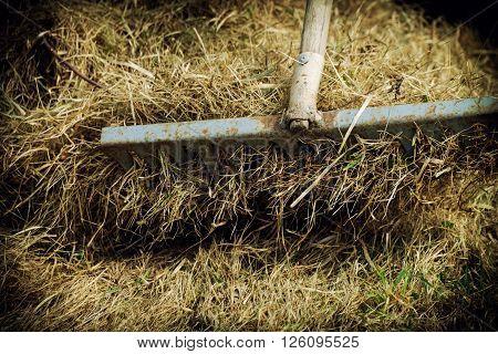 A man removes hay rake in his garden.