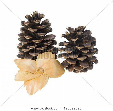 Pinecones and a dried flower for decoration - path included