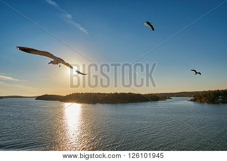 Sea Gull flying into sunrays at Sea