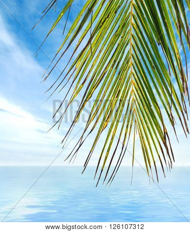 Palm leave over the sea background