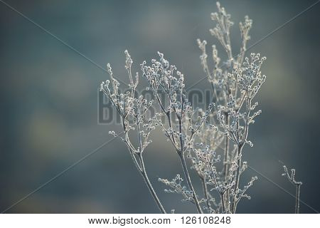 Frozen plants in small crystals of ice toned image with soft bokeh