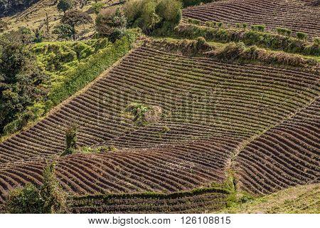 View of a Potato Farming Field in Costa Rica