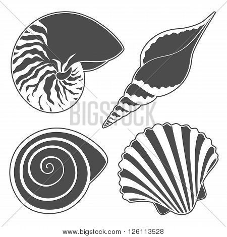 Set of graphic sea shells. Isolated objects. Vector illustration.