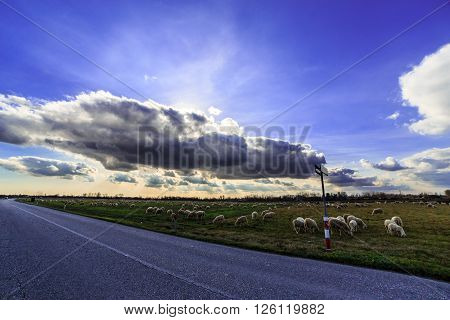 Flock Of Sheeps In The Countryside
