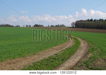 path leading in the green fields with crop in spring