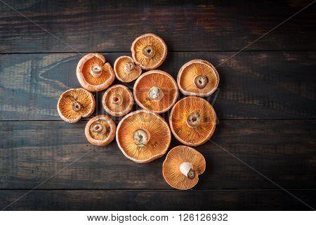 Edible Orange Mushrooms - Saffron Milk Cap. Top View.