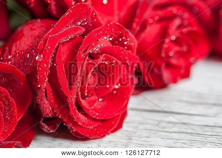 Red Rose With Water Droplets Extreme Closeup.