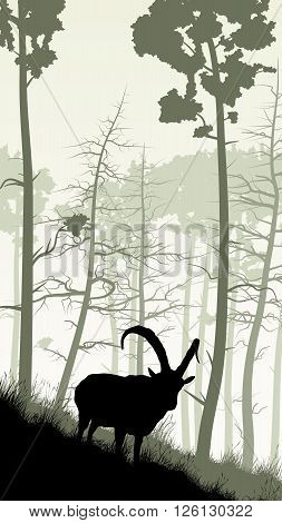Vertical illustration of grassy hillside and coniferous wood with mountain goat.
