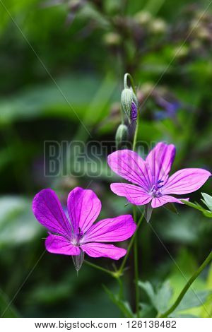 daylight macro photographed pink wildflowers revival of nature