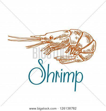 Vintage engraving sketch icon of marine rock shrimp or prawn with short antennae and caption Shrimp. Underwater wildlife, seafood menu, old fashioned recipe book design usage