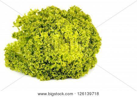 Fresh salad romaine lettuce isolated on white background. Isolated