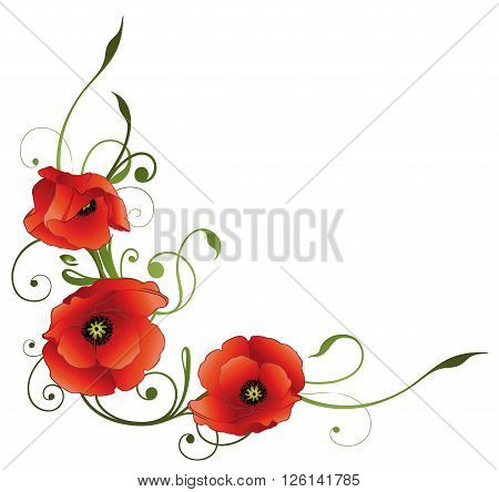 Summer time flowers, red poppies, floral vector decoration.