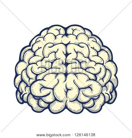 Human brain hand drawn icon on white background. Vector illustration