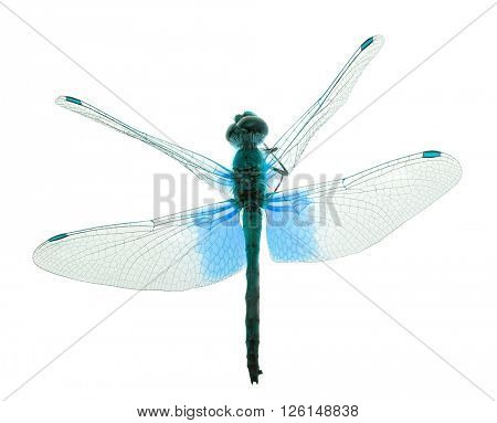 blue dragonfly isolated on white background