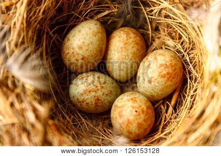 Bird eggs. This is a warm photo from bird eggs
