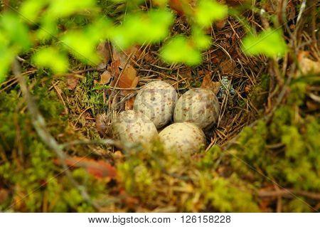 Bird's nest on a ground. This bird's nest was found deep in the forest