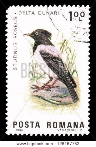 ROMANIA - CIRCA 1983 : Cancelled postage stamp printed by Romania, that shows Rosy Starling.
