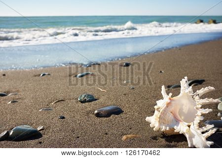 Seashell on the beach under blue sky