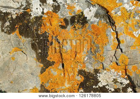 Background of Textured Grey Granite with Brown and Orange Fungal Mold closeup Outdoors