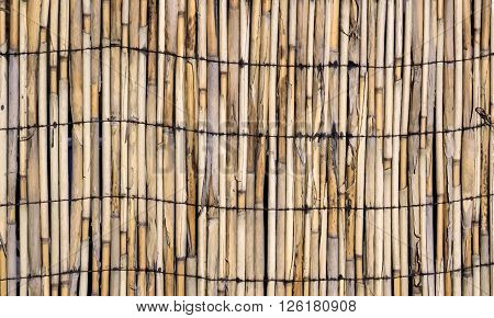 Vector Texture Of Wall Of Bound Bamboo. Vector Illustration