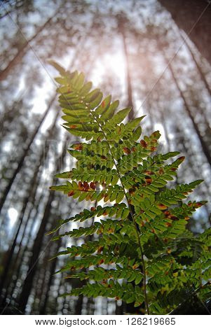 The Sun's Rays Are Punched Through The Fern Leaf