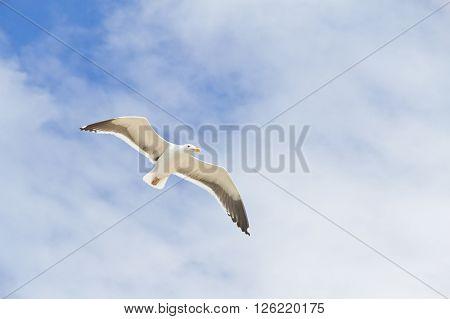 Seagull At Beach On Garrapata State Park, California