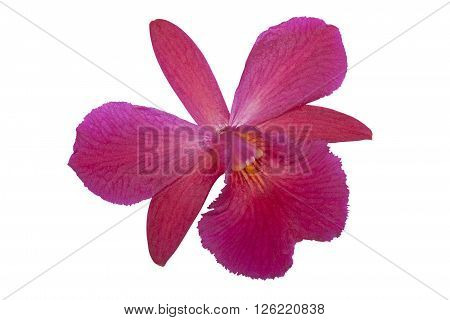 Single isolated mauve orchid with yellow striped center on white